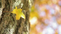 Yellow Fall Leaf on Tree Stock Footage