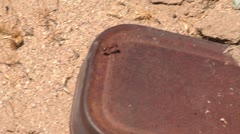 Desert red fire ant on rusted tin hot summer day nature cutaway transition Stock Footage