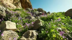 A rocky, flowered hillside in Israel. Stock Footage