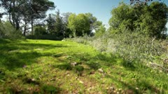 a forest clearing in Israel. - stock footage