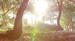 the sun shining in a grove of trees in Carmel region of Israel. - stock footage