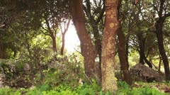A rocky grove of trees in the Carmel region of Israel. Stock Footage