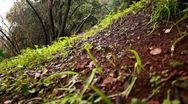 A green and brown hillside floor in Iyon Tanur in Israel. Stock Footage