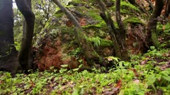 a mossy boulder in Israel. - stock footage