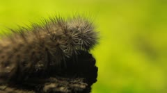 Macro Caterpillar on a grass field, leaf, tree, wood Stock Footage