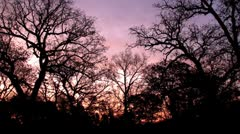 Dawn or early morning and trees against purple sky and colors of rising sun Stock Footage
