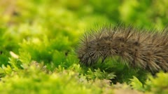 Macro Caterpillar on a grass field, leaf, tree, wood Stock Footage