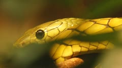 Green Mamba Africa Stock Footage