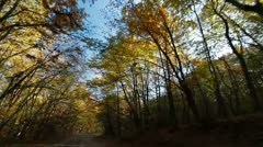 driving in the autumn forest - stock footage