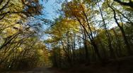 Driving in the autumn forest Stock Footage