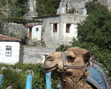 Camel in the village Stock Footage