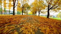 Autumn walking thru park Stock Footage