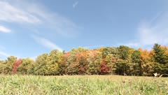 Trees with changing colors on a clear fall day - stock footage
