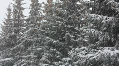 Snow-covered fir and snow Stock Footage