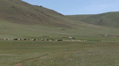 Mongolia: Livestock on the Steppes of Mongolia Stock Footage