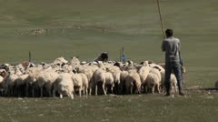 Mongolia: Proding Sheep into Coral Stock Footage