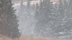 Swirling Blustery Snow Blizzard Forest Stock Footage