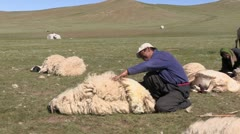 Mongolia: Sheering the Sheep Stock Footage