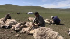 Mongolia: Sheering Time Stock Footage