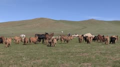 Mongolia: Herd of Goats on the Steppes of Mongolia Stock Footage