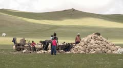 Sheep Sheering Time Stock Footage