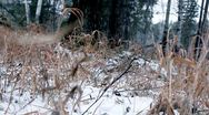Stock Video Footage of old trees in winter forest