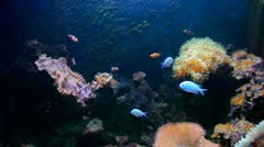 Sea life with fish and clownfish Stock Footage
