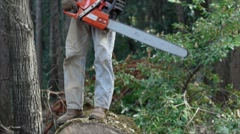 Logger cutting round from large oak tree Stock Footage