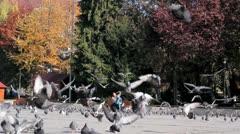 Family Feeding Pigeons Stock Footage