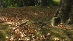 Autumn leaf fall scene - stock footage