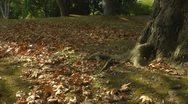 Autumn leaf fall scene Stock Footage