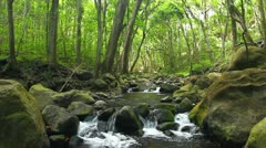 Beautiful Stream in Forest Stock Footage