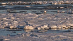 Frozen Ice Tidal Mud Flats pan left 2 Stock Footage