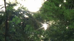 Sunlight sparkles through the branch of trees Stock Footage
