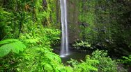 Jungle Waterfall in Hawaii Stock Footage