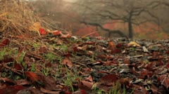 Autumn in the Nagano Prefecture, Japan. Stock Footage