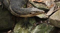 Reptile ryömii luontoa, eläimiä Arkistovideo
