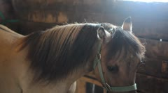 Horse in the sun - stock footage
