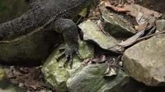 Reptile crawling in nature, wildlife Stock Footage