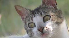 Cat close up Stock Footage