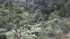 Tropical rain forest, jungle Stock Footage