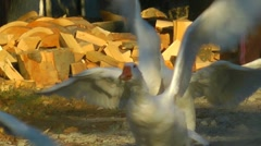 flying geese slowmo - stock footage