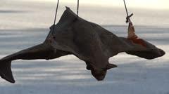 Hanging Rubber Bat Stock Footage