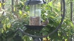 Backyard Birds 1 Stock Footage