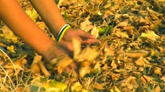 Autumn season 2 Stock Footage