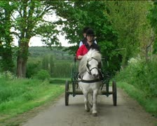 Shetland pony driving carriage on road 2 Stock Footage