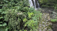 Tropical rain forest Stock Footage