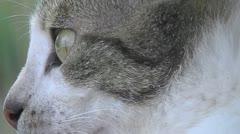 Kitten 2 Stock Footage