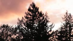 Northwest nature - Snoqualmie pines at sunset Stock Footage