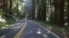 Driving through redwood forest Stock Footage
